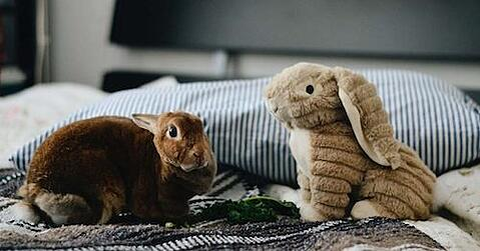 blog_bunny-4