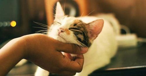 blog_cat-1