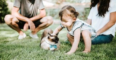blog_kitten-5